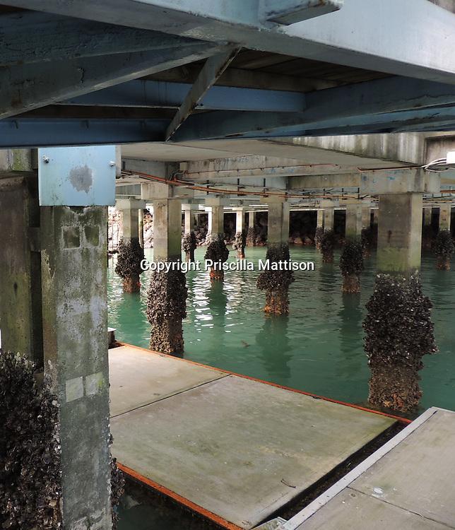Barnacles encrust the supports under a dock in Waiheke Island.