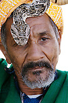Snake on head of a snake charmer, Morocco