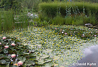 0723-1003  Ornamental Garden Pond with Full Bloom Water Lilies - Nymphaea  © David Kuhn/Dwight Kuhn Photography