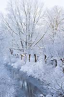 Bach im Winter, Schnee, Winterlandschaft, verschneite Äste, Kopfweiden, Kopfweide, Kopfbäume, Kopfbaum, Winterstimmung, winterlich, eisig, Eis, kalt, Steinau, Tieflandbach, Schleswig-Holstein, Deutschland, Norddeutschland, snow