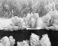 Hoar frost-covered trees along the Snake River in eastern Oregon; Ontario State Park, OR