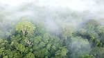 Aerial view of lowland Amazonia rainforest just after sunrise. Manu Biosphere Reserve, Amazonia, Peru.
