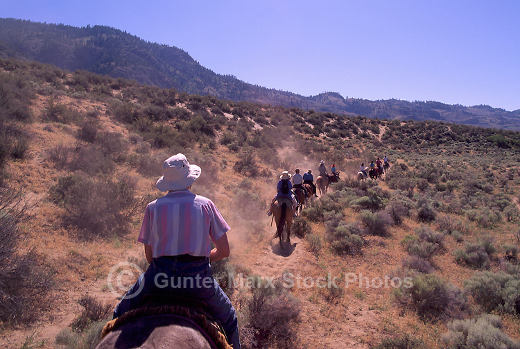 "Guided Horseback Riding Tour in ""Pocket Desert"" near Osoyoos, BC, South Okanagan Valley, British Columbia, Canada - Model Released Person in foreground"