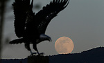 The moon rises behind the Freedom eagle sculpture, in Carson City, Nev., on Wednesday, May 6, 2020. <br /> Photo by Cathleen Allison