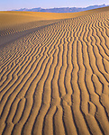 Death Valley National Park, CA<br /> Sand patterns on dune ridges - Mesquite Flat Dunes