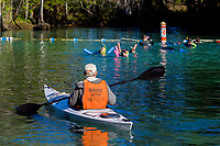 A Manatee Watch Volunteer keeps an eye out for curious snorkelers making sure they obey the laws regarding interactions with the endangered Florida Manatee. Three Sisters Sanctuary. Crystal River,Florida. (no MR)