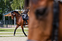 NZL-Megan Heath (ST DANIEL) 2012 GER-HSBC Luhmuhlen International Horse Trial - CCI****: excercise/training/familiarisation: Wednesday