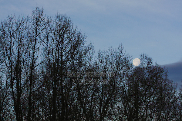 Bare Trees and Moon, North Carolina, USA