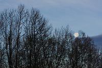 Bare Trees and Moon, North Carolina, USA