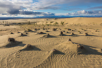 The sand dunes in the Kobuk Valley National Park, Arctic, Alaska.