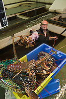 Europe/France/Bretagne/29/Finistère/Camaret-sur-mer:  Pierre Bouvier et ses Crustacés aux Viviers Henry; Langoustes et Homards ou Olivier Bellin de l'Auberge des Glazicks à Plomodiern fait ses achats<br />  [Non destiné à un usage publicitaire - Not intended for an advertising use]