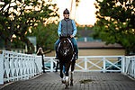 OCT 27: Breeders' Cup Dirt Mile entrant Omaha Beach, trained by Richard E. Mandella,  at Santa Anita Park in Arcadia, California on Oct 27, 2019. Evers/Eclipse Sportswire/Breeders' Cup