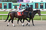 January 16, 2016: Bashaar with Kerwin D Clark up in the Louisiana Stakes race at the Fairgrounds race course in New Orleans Louisiana. Steve Dalmado/ESW/CSM