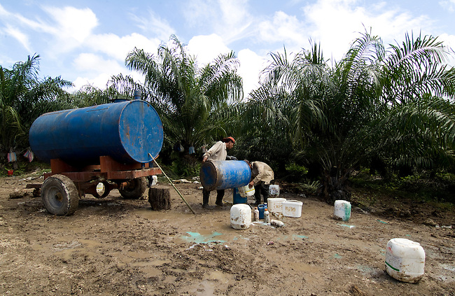 Guatemala, Petén, Local worker process african palm fruits for vegetal oil production on Olmeca companys 25000 hectar finca la Instancia in Department El Petén. The company and family Olmeca is one of the biggest land owner in Guatemala.