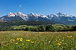 Oesterreich, Salzburger Land, Pinzgau, zwischen Maria Alm und Hinterthal: Blumenwiese und Steinernes Meer | Austria, Salzburger Land, Pinzgau, near Maria Alm: spring meadow and Steinernes Meer mountains