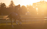 November 3, 2020: Harvey'S Lil Goil, trained by trainer William I. Mott, exercises in preparation for the Breeders' Cup Filly & Mare Turf at  Keeneland Racetrack in Lexington, Kentucky on November 3, 2020.Carolyn Simancik/Eclipse Sportswire/Breeders Cup