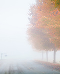 Maple trees fade into an autumn fog in Hartland, VT, USA