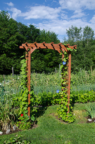arbor with morning glory leading to vegetable garden, Yarmouth Community garden, Maine