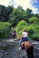 Horseback riders cross  steams in Waipio Valley on a guided excursion.