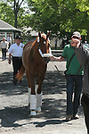 Derby/Preakness winner I'll Have Another arrives at Belmont Park toi ready for his pursuit of the Triple Crown.  Trainer Doug O'Neill
