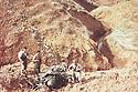 Iraq 1991 .On the 2nd of march, Iraqi fighter shot down by the Americans in Tchiar Tcherno, district of Germian .Irak 1991 .Le 2 mars, un avion de chasse irakien abattu par les Americains a Tchiar Tcherno dans la region de Germian
