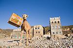 Dromedary (Camelus dromedarius) camel feeding on cardboard box in town, Hawf Protected Area, Yemen