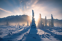 Shadows, mist and light... the sun sets behind a grove of trees covered in rime ice, as temperatures hovered below -20 in this cold valley of Alaska's Chugach Range.
