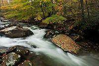 Autumn color along the Oconaluftee River