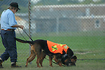 Illinois and Wisconsin Search and Rescue Dogs Organization .