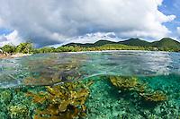 Split level view of Elkhorn Coral.Scott Beach, Caneel Bay Resort.Virgin Islands National Park.St. John, U.S. Virgin Islands