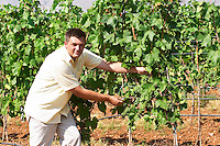 The vineyard manager UNK UNK. Showing the young bunches and the original way of training the vines. Vranac grape variety. Vineyard on the plain near Mostar city. Hercegovina Vino, Mostar. Federation Bosne i Hercegovine. Bosnia Herzegovina, Europe.