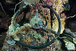 White Beach, Russell Islands, Solomon Islands; the steering wheel of a tractor from WWII is encrusted with corals, sponges and algae, as well as the eggs of a Chromis fish