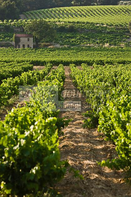 Europe/France/Rhône-Alpes/26/Drôme/Env de Vinsobres: le vignoble AOC Côtes du Rhône