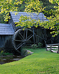 Blue Ridge Parkway, VA<br /> Sunlight on green spring branches framing Mabry Mill