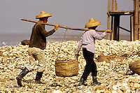 Hong Kong. Couple working at the oyster beds at Lau Fau Shan. New Territories.  China..