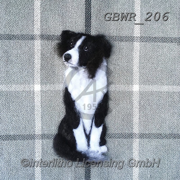 Simon, REALISTIC ANIMALS, REALISTISCHE TIERE, ANIMALES REALISTICOS, innovative, paintings+++++SharonS_BorderCollie,GBWR206,#a#, EVERYDAY dogs,breeds of dog,