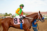 DEL MAR,CA-SEPTEMBER 02: King of Speed,ridden by Gary Stevens, after winning the Del Mar Juvenile Turf at Del Mar Race Track on September 2,2018 in Del Mar,California (Photo by Kaz Ishida/Eclipse Sportswire/Getty Images)
