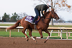Second Of July, trained by trainer Philip A. Gleaves, exercises in preparation for the Breeders' Cup Juvenile Turf Sprint at Keeneland Racetrack in Lexington, Kentucky on November 1, 2020. /CSM