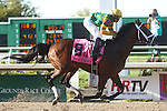 March 29, 2014: on Louisiana Derby Day at the Fairgrounds Race Course in New Orleans, LA. Mary M. Meek/ESW/CSM; New Orleans Handicap winner Palace Malice and jockey Mike Smith