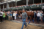 June 13, 2015 Triple Crown winner American Pharoah is paraded between races at Churchill Downs, where he won the Kentucky Derby this year.  ©Mary M. Meek/ESW/CSM