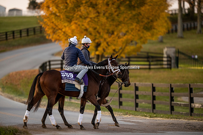 November 3, 2020: Speech, trained by trainer Michael W. McCarthy, exercises in preparation for the Breeders' Cup Filly & Mare Sprint at Keeneland Racetrack in Lexington, Kentucky on November 3, 2020. Alex Evers/Eclipse Sportswire/Breeders Cup