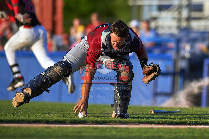 Mahoning Valley Scrappers catcher Daniel Salters (12) fields a bunt during a game against the Batavia Muckdogs on June 24, 2015 at Dwyer Stadium in Batavia, New York.  Batavia defeated Mahoning Valley 1-0 as three Muckdogs pitchers combined to throw a perfect game.  (Mike Janes/Four Seam Images)