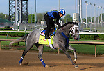 LOUISVILLE, KY - APRIL 25: Mohaymen (Tapit x Justwhistledixie, by Dixie Union) gallops on track with exercise rider Miguel Jaime, Churchill Downs, Louisville KY, preparing for the Kentucky Derby. Owner Shadwell Stable, trainer Kieran McLaughlin. (Photo by Mary M. Meek/Eclipse Sportswire/Getty Images)