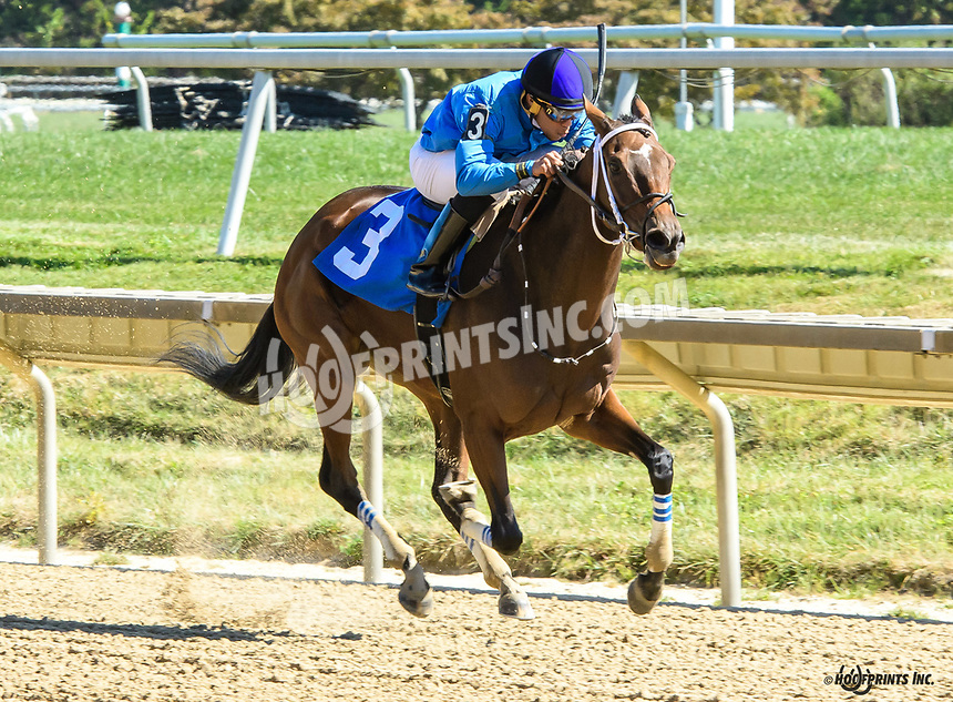 Patty Mac's Girl winning at Delaware Park on 10/5/19