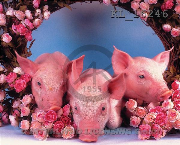 Interlitho, Alberto, ANIMALS, pigs, photos, 3 piglets, roses(KL16246,#A#) Schweine, cerdos