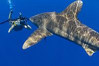 Photographer MR) and an oceanic whitetip shark, Carcharhinus longimanus, Hawaii.