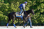 May 17, 2013, Preakness contender Govener Charlie, ridden by Jorge Alvarez and led by assitant trainer Jimmy Barnes, heads to the track for his morning gallop of Pimlico Race Course in Baltimore, MD. (Joan Fairman Kanes/Eclipse Sportswire)