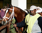 Feb 2010:  Discreetly Mine walks around the paddock before the Risen Star Stakes at the Fairgrounds in New Orleans, La.
