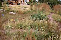 Pathways in New Mexico meadow garden with Bouteloua gracilis seed heads, Ratibida, flowering Eragrostis trichodes (Sand love grass), and Schizachyrium scoparium (Little Bluestem); design by Judith Phillips