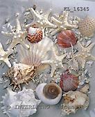 Interlitho, Alberto, MODERN, photos, mussels, sand, KL16345,#n# moderno